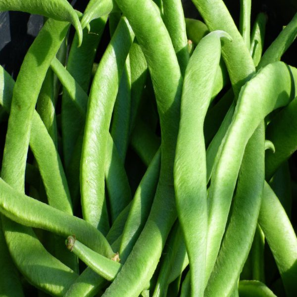 bs-green-bean-3